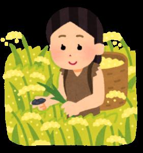 HPにアクセス殺到!「稲作ゲーム『天穂のサクナヒメ』」大ヒットの要因は農業体験に!?